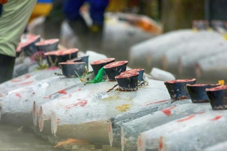 Giá cá ngừ vằn Bangkok đã có dấu hiệu tăng