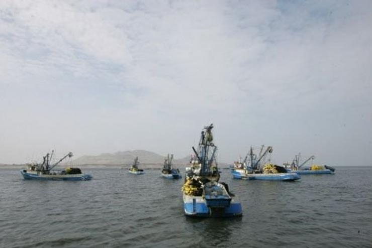 Thị trường bột cá không ổn định vì Peru cấm khai thác cá cơm