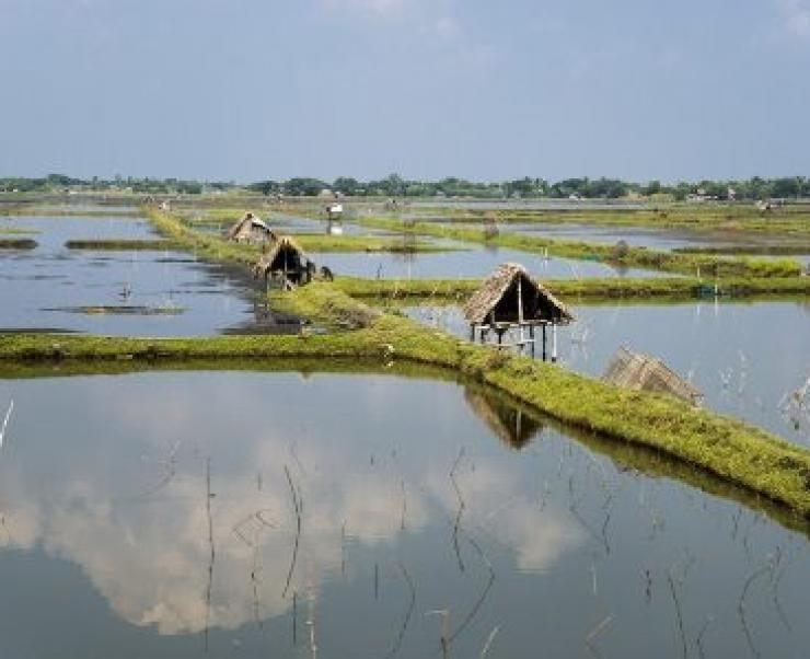 Bangladesh: Xuất khẩu tôm giảm 34% kể từ 2014