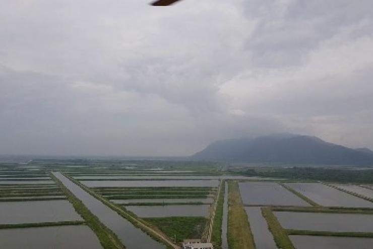 Ecuador: Sản lượng tôm có thể tiếp tục tăng