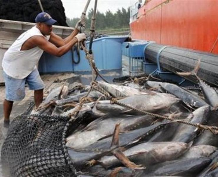 Giá cá ngừ vằn Seychelles tăng do nguồn cung thấp