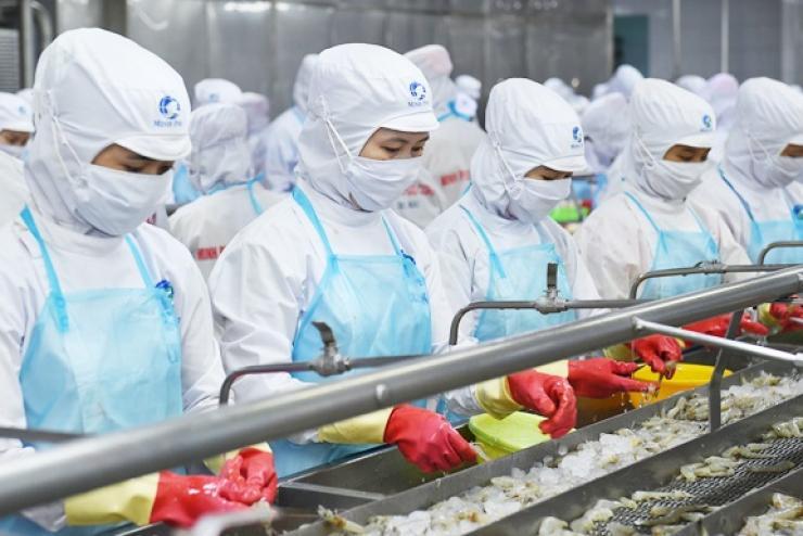 Xuất khẩu tôm sang EU: Kỳ vọng từ EVFTA