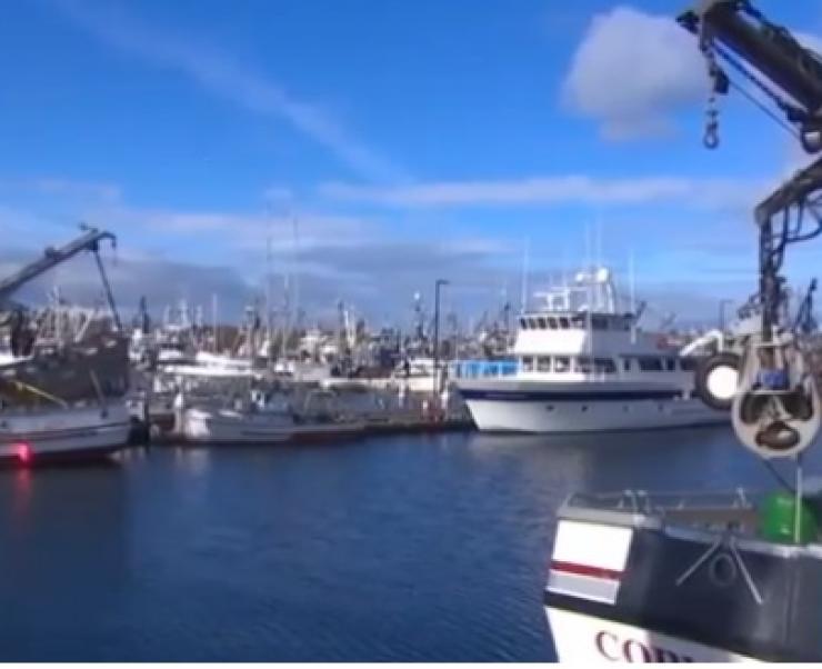 Mỹ: Dịch corona làm gián đoạn hoạt động thương mại thủy sản ở Washington
