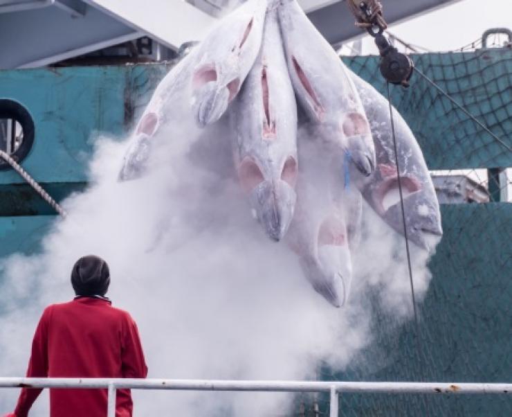 Kiểm soát tốt hơn giúp ngăn chặn thủy sản bất hợp pháp