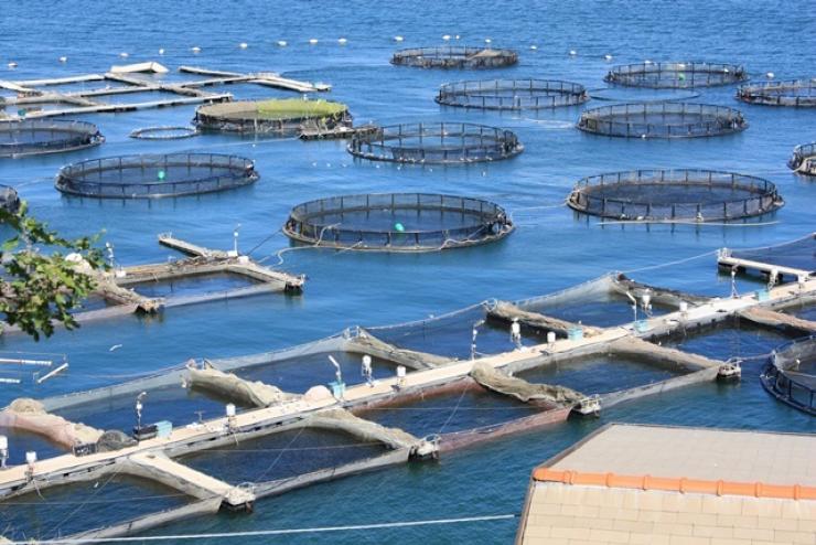 Ngành nuôi trồng thủy sản châu Âu cần những giải pháp cụ thể trong bối cảnh Covid-19