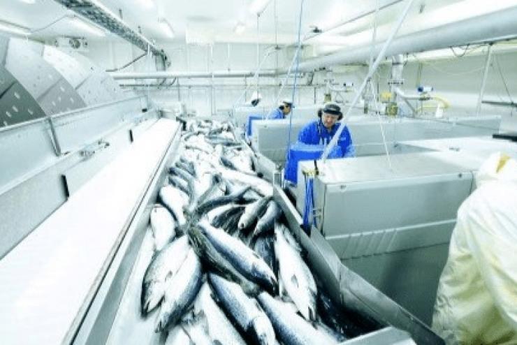 Xuất khẩu thủy sản Na Uy tháng 4/2020 giảm do COVID-19