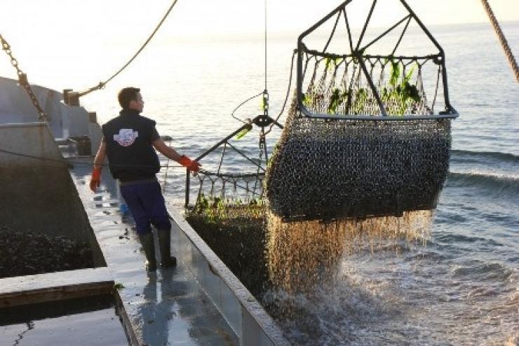 Ảnh hưởng của đại dịch COVID-19 đến doanh nghiệp thủy sản thế giới